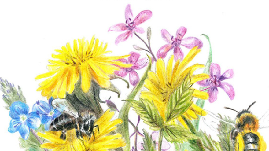 """Grafika przedstawia pszczoły zbierające nektar na łące kwietnej, u góry napis na białym tle: Konkurs na najpiękniejszy ogród, rabatkę lub balkon miododajny w ramach projektu """"Bliżej Natury"""", na dole loga organizatorów na żółtym tle"""